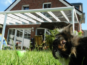 Glas Terrassenüberdachung VSG 2-teilig